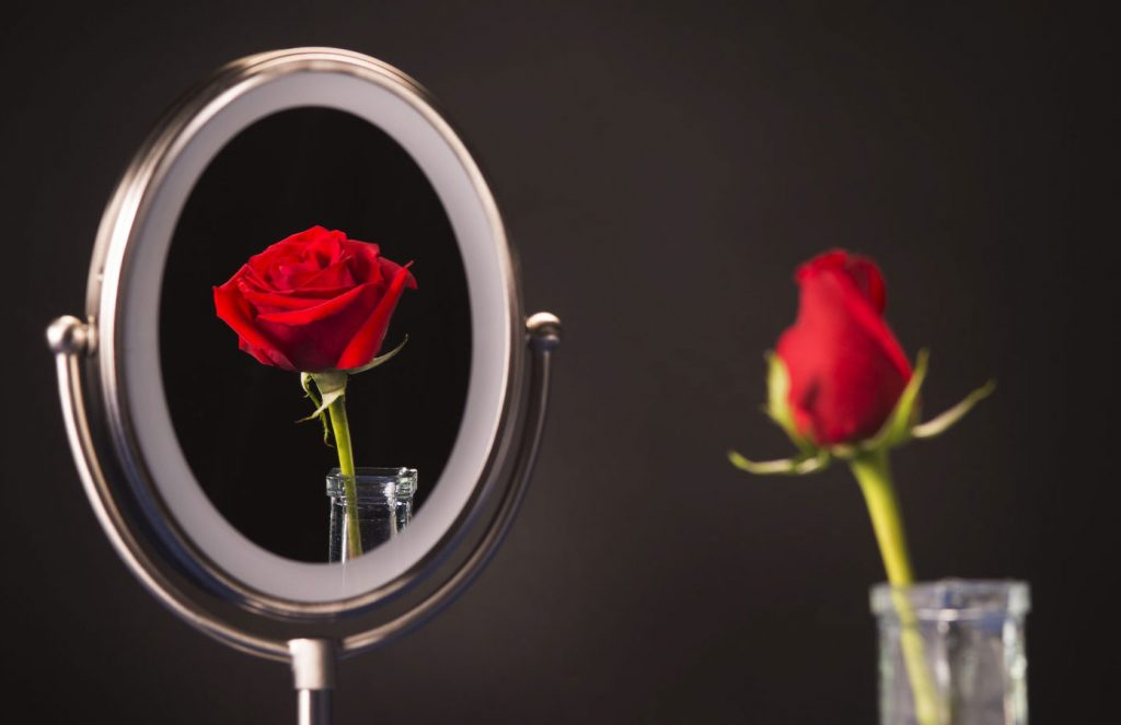 rose in a mirror blooms